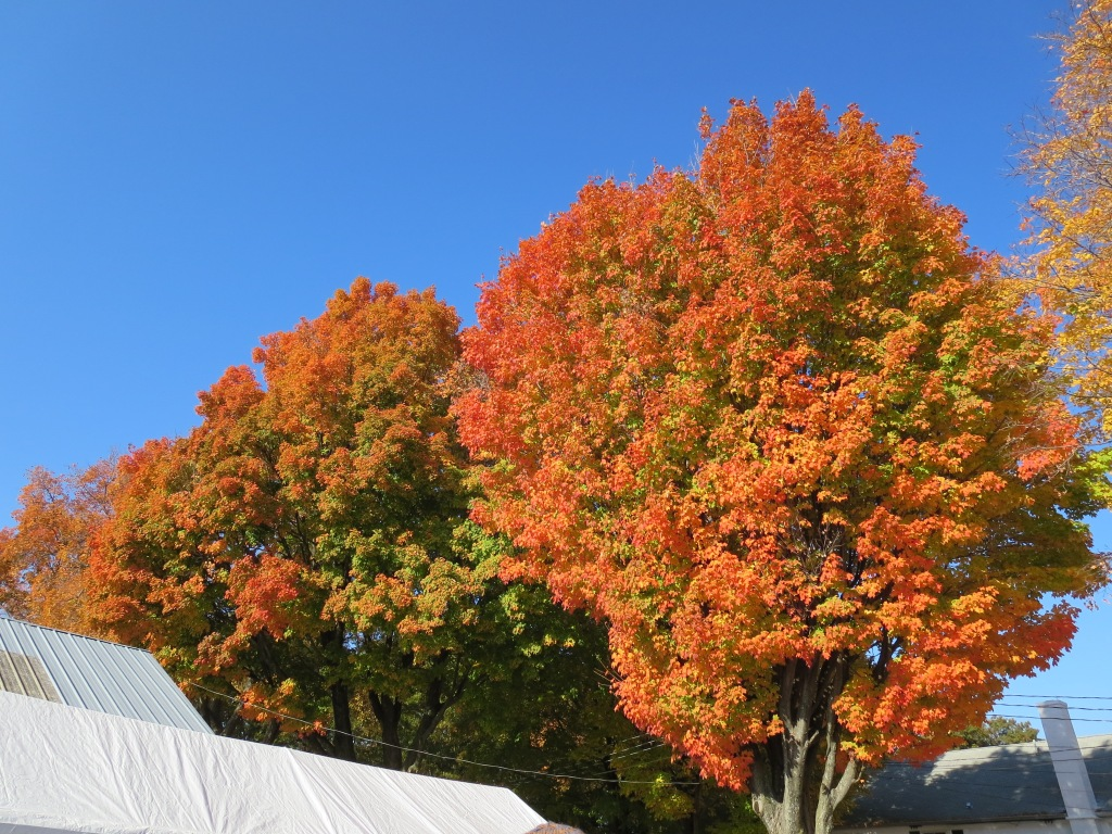 the weather was amazing the whole weekend.  and so was the foliage!
